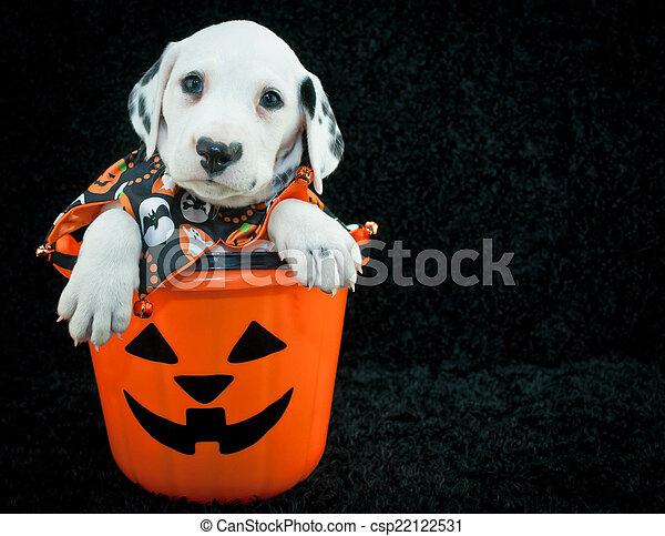 Halloween Puppy - csp22122531