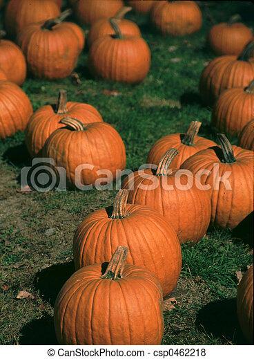 Haloween Pumpkins - csp0462218
