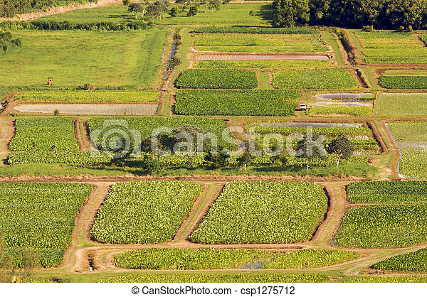Hanalei Valley and Taro Fields - csp1275712