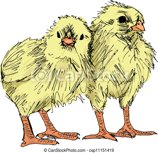 Hand draw sketch of Chicken. Vector - csp11151419