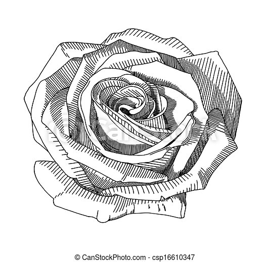 Hand Draw Sketch Rose Hand Draw Black And White Sketch Ornate Rose