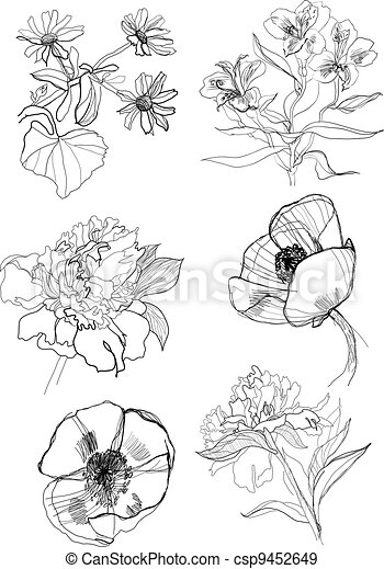 Hand Drawing Flowers Set Flowers Set Drawing On White Background