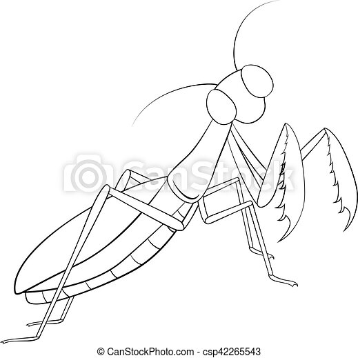 Hand drawing, sketch, mantis on a white background - csp42265543