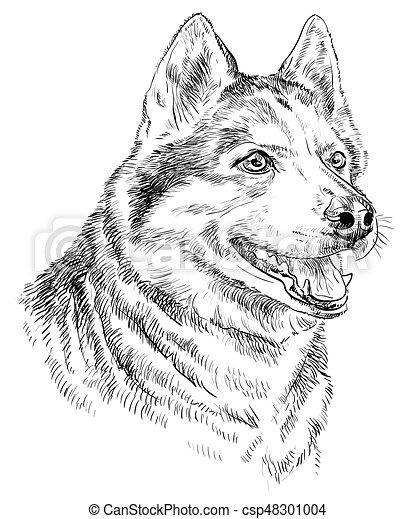 hand drawing vector portrait of siberian husky vector portrait of