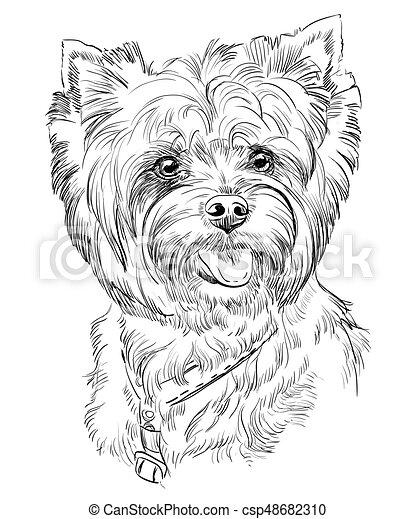 Hand drawing vector portrait of Yorkshire Terrier - csp48682310