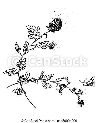 Hand drawing watercolor black chrysanthemum flowers and leaves ornament - csp50994299