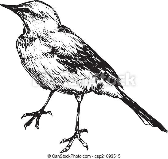 hand drawn bird - csp21093515