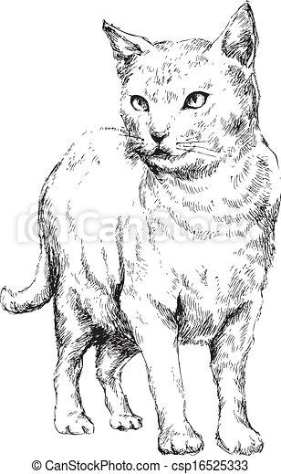 hand drawn cat - csp16525333