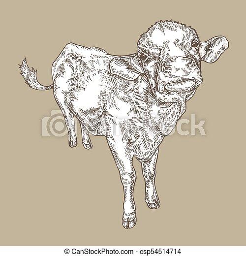 Hand Drawn Cow Vintage Farm Animal Design Vector Illustration In Sketch Style