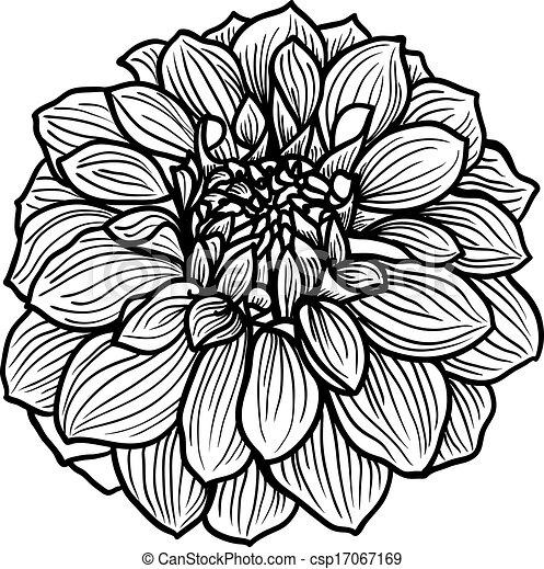 hand drawn dahlia flower black and white vector illustration rh canstockphoto com teal dahlia clipart blue dahlia clipart