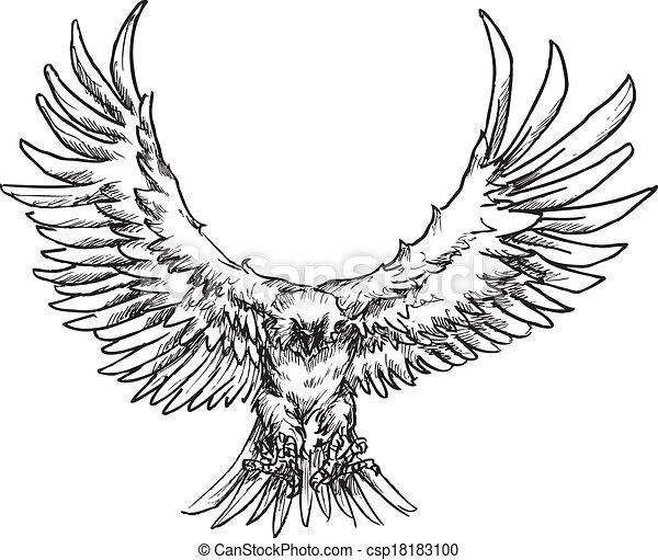 hand drawn eagle - csp18183100