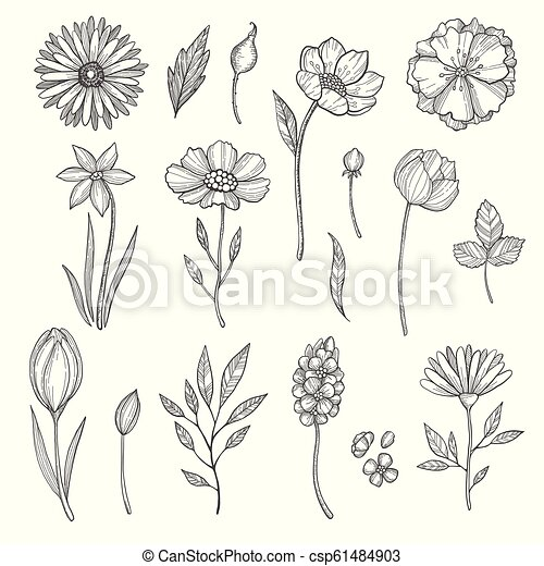Hand drawn flowers. Vector various pictures of plants