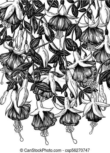 Hand drawn fuchsia flowers - csp56270747