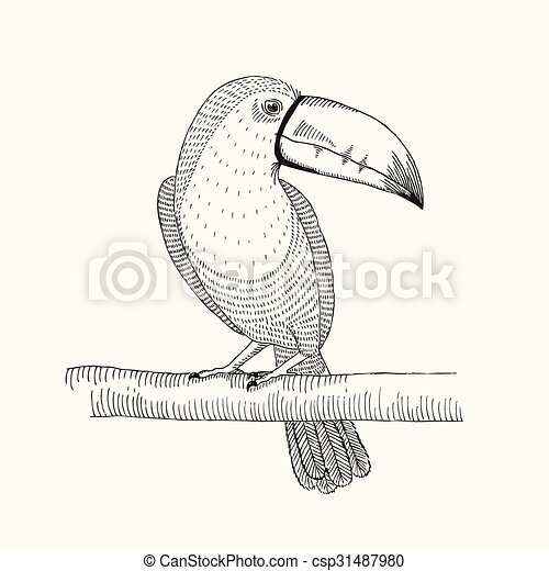 Hand drawn illustration of toucan bird on the branch. - csp31487980