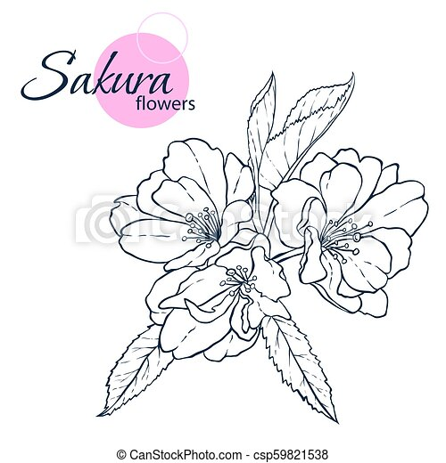 Hand Drawn Japanese Blossom Sakura Flowers Line Art Style Illustration Coloring Book For Adult And Children Illustrations Canstock