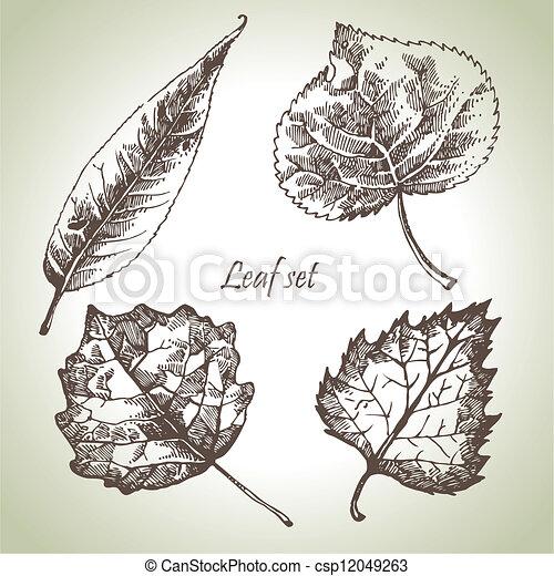Hand drawn leaf set - csp12049263