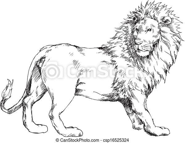 hand drawn lion - csp16525324