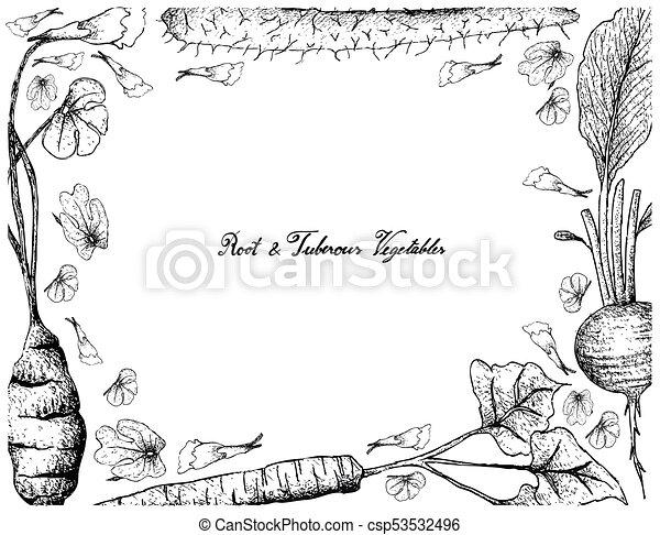 Hand Drawn of Chinese Yam on White Background - csp53532496
