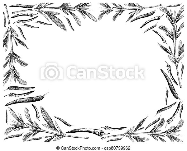 Hand Drawn of Summer Savory with Chili Peppers Frame - csp80739962