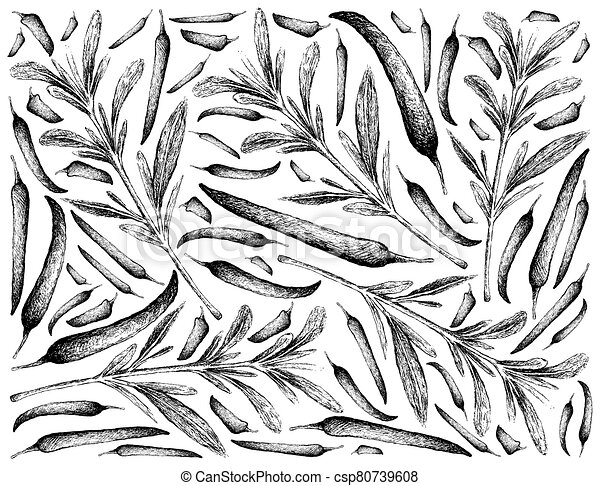 Hand Drawn of Summer Savory with Chili Peppers - csp80739608