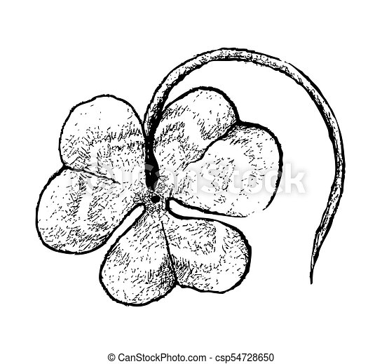 Hand Drawn Of Three Leaf Clovers On White Background Symbols For