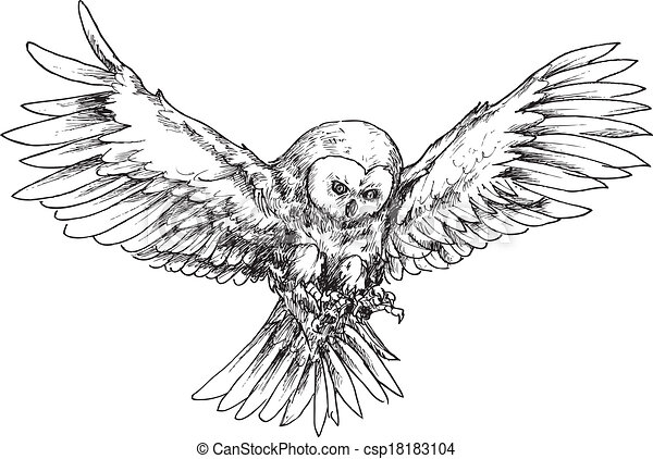 hand drawn owl - csp18183104