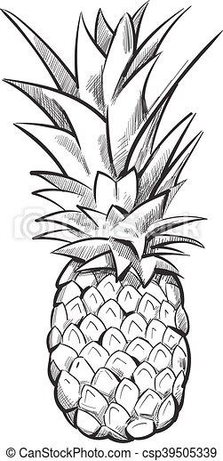 Hand drawn pineapple. vector fruit. Hand drawn pineapple ...