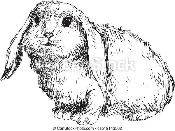hand drawn rabbit - csp19143582