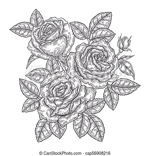hand drawn rose flowers and leaves vintage floral composition