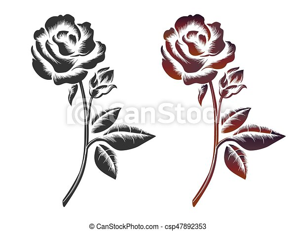 Hand Drawn Roses On White Background Vector Icons Of Black And Wine