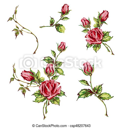 Decorative Hand Drawn Roses Leaves And Buds Set Of Blooming