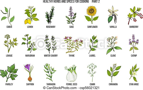 Hand drawn set of culinary herbs and spices - csp56021321