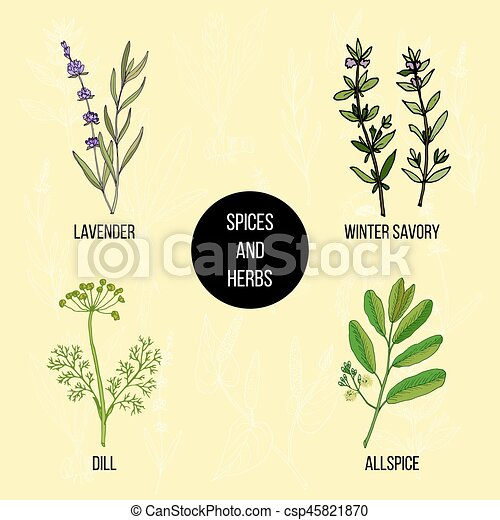 Hand drawn set of culinary herbs and spices - csp45821870