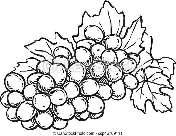 hand drawn sketch grapes illustration - csp46789111