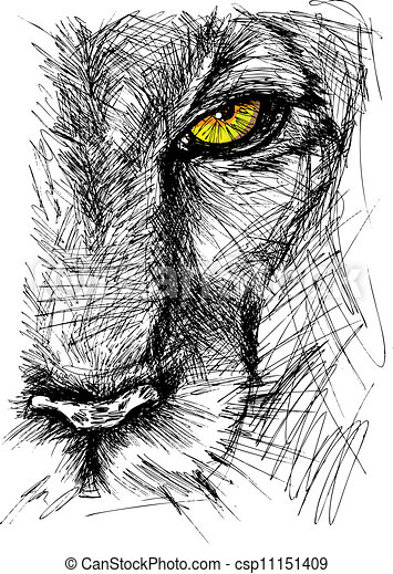 Hand drawn Sketch of a lion - csp11151409