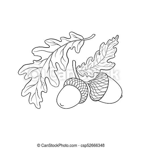 Hand Drawn Sketch Of Oak Leaf Branch And Acorn Hand Drawn Black