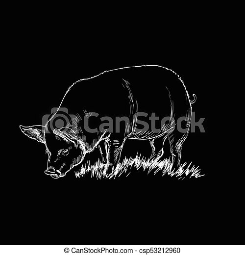 Hand Drawn Sketch Pig Vector illustration - csp53212960