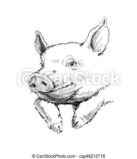 Hand Drawn Sketch Pig Vector illustration - csp46212718