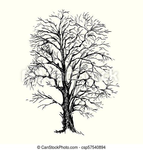 Hand Drawn Sketch Tree Vector illustration - csp57540894