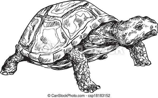 hand drawn turtle - csp18183152