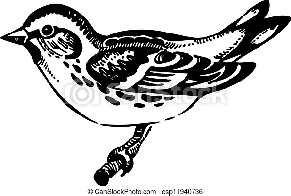 hand-drawn, uccello, siskin, illustrazione - csp11940736