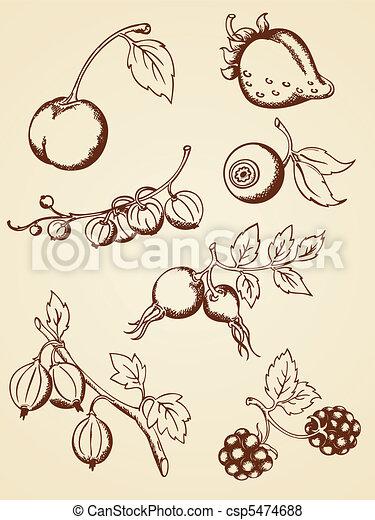 hand drawn vintage berries - csp5474688