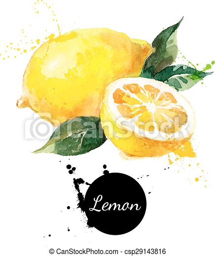 Hand drawn watercolor painting lemon on white background - csp29143816