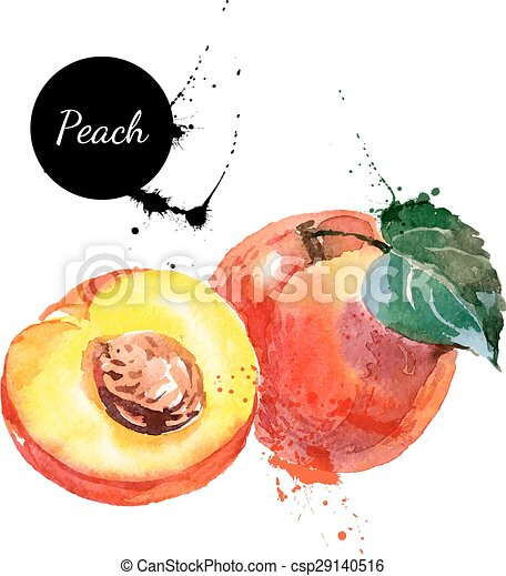 Hand drawn watercolor painting peach on white background - csp29140516