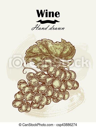 Hand drawn wine grapes vintage. Vector sketch - csp43886274