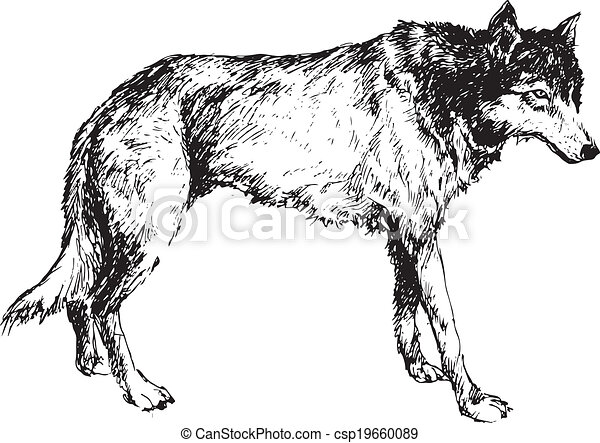 hand drawn wolf csp19660089