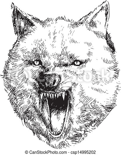 hand drawn wolf head csp14995202