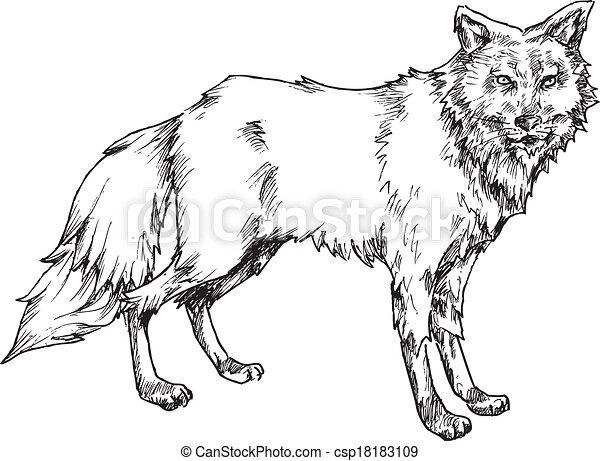 hand drawn wolf - csp18183109