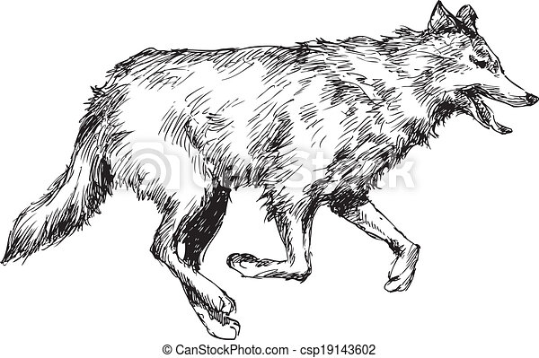 hand drawn wolf csp19143602