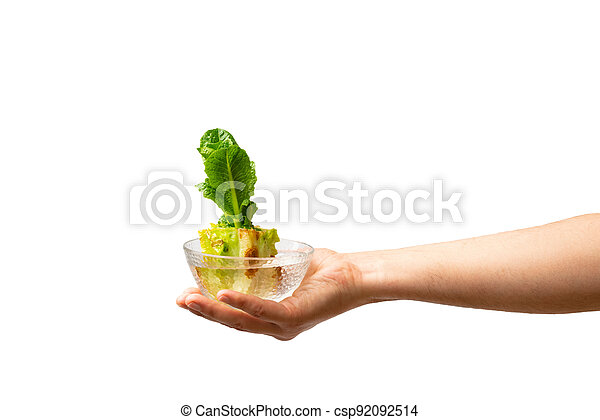 Hand holding glass bowl with regrowing chinese cabbage. Using vegetable scraps to grow organic vegetables at home. - csp92092514